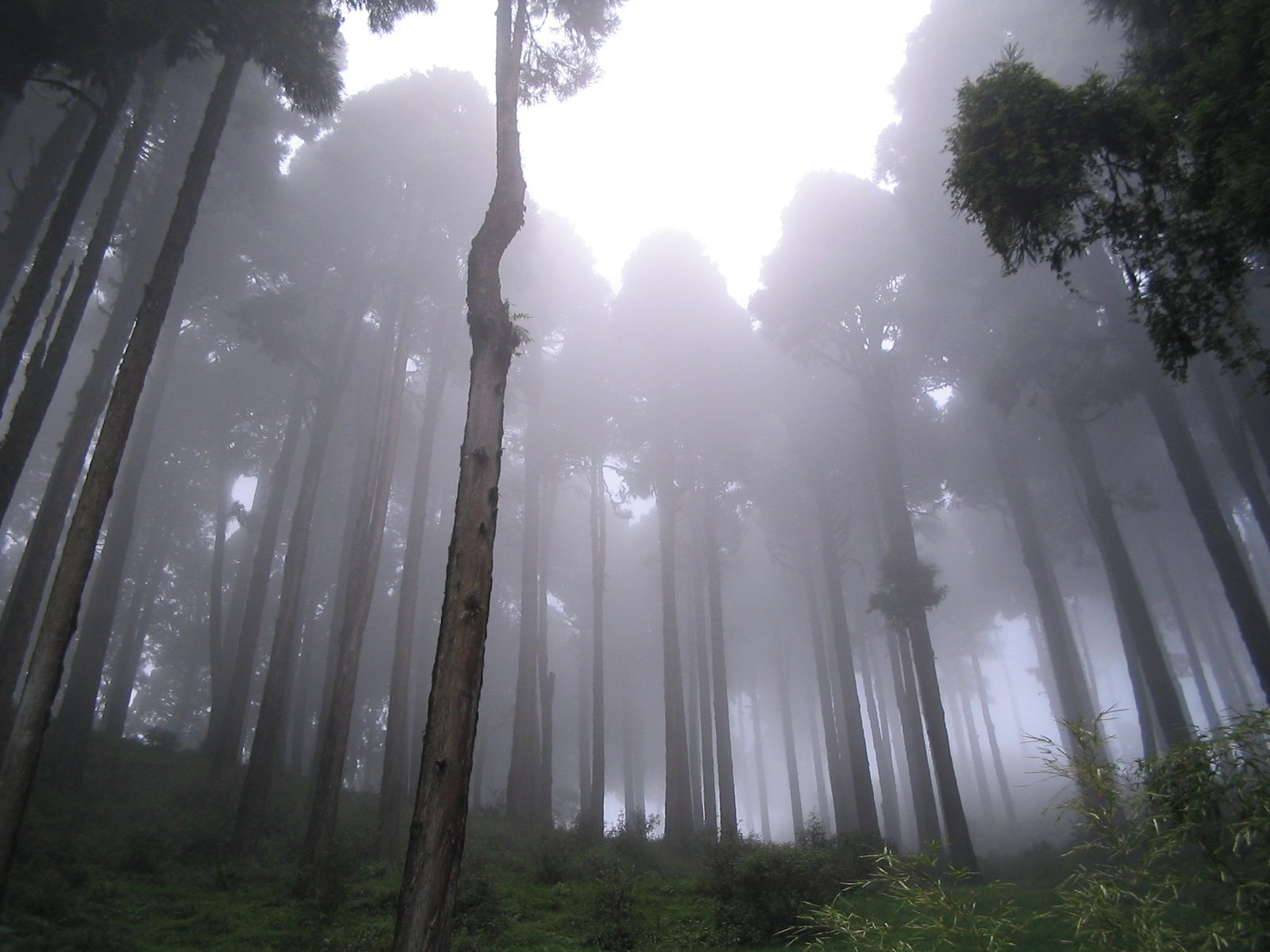 Misty morning at Mirik