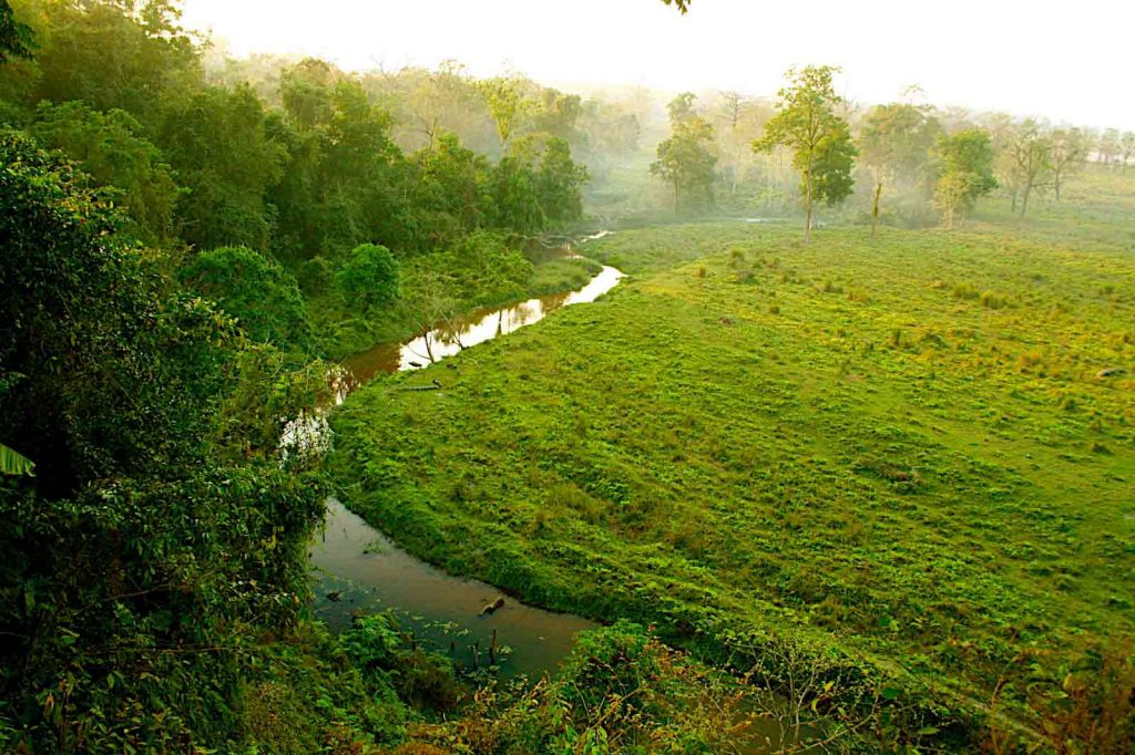 Panoramic view of river stream meandering through the emerald green forest