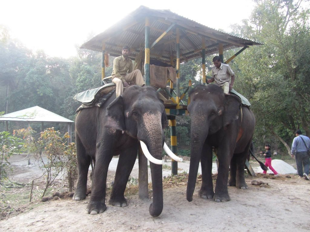 Getting ready for elephant safari in Gorumara
