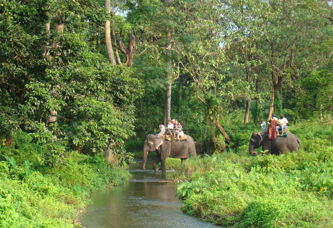 Elephants gracefully crossing the serene river stream in Gorumara