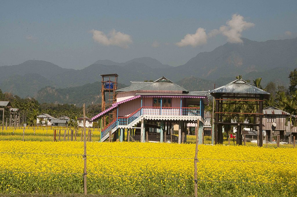 Mustard field of Lepchakha