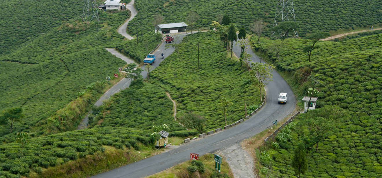 The road leading towards Mirk sprawled with tea garden