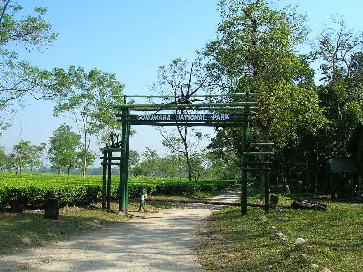 Gorumara Jungle Safari Charges