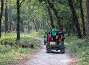 Jungle Safari at Gorumara National Park