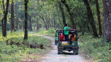Jungle Safari at Gorumara National Park