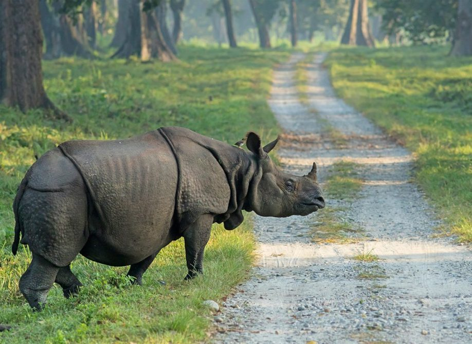 Witness the glory of the majestic One-Horned Rhinoceros with the Dooars Tour Packages of North Bengal Tourism