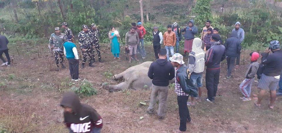Two elephants killed in Batashi
