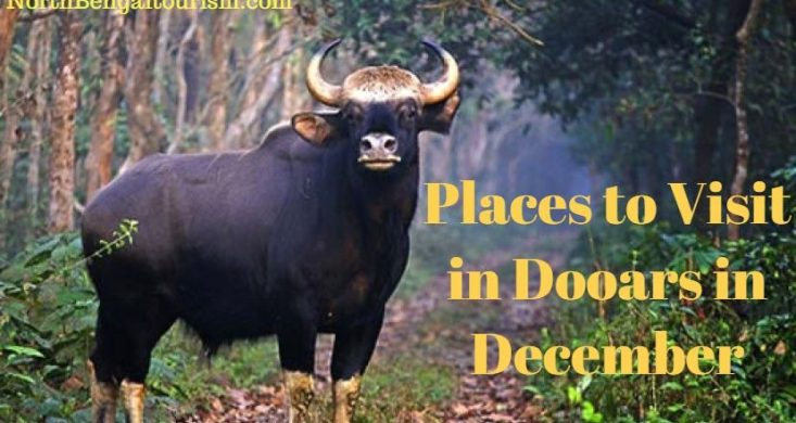 Placesto Visit in Dooars in December