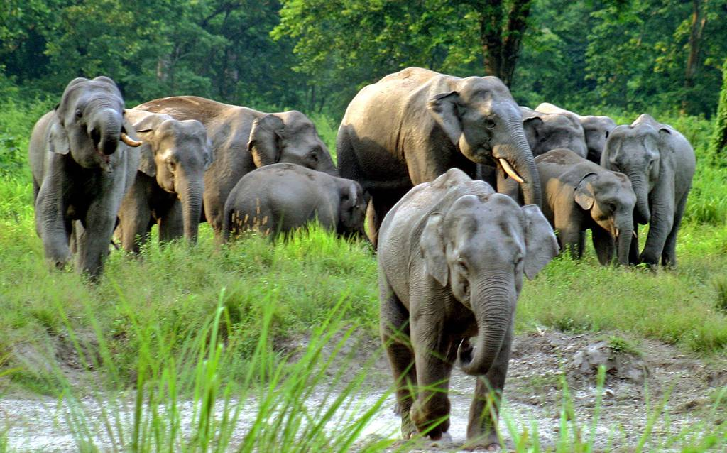 Elephant Safari at Jaldapara National Park