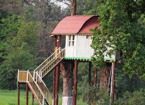 Tree House at Gorumara Elephant Camp, Dhupjhora