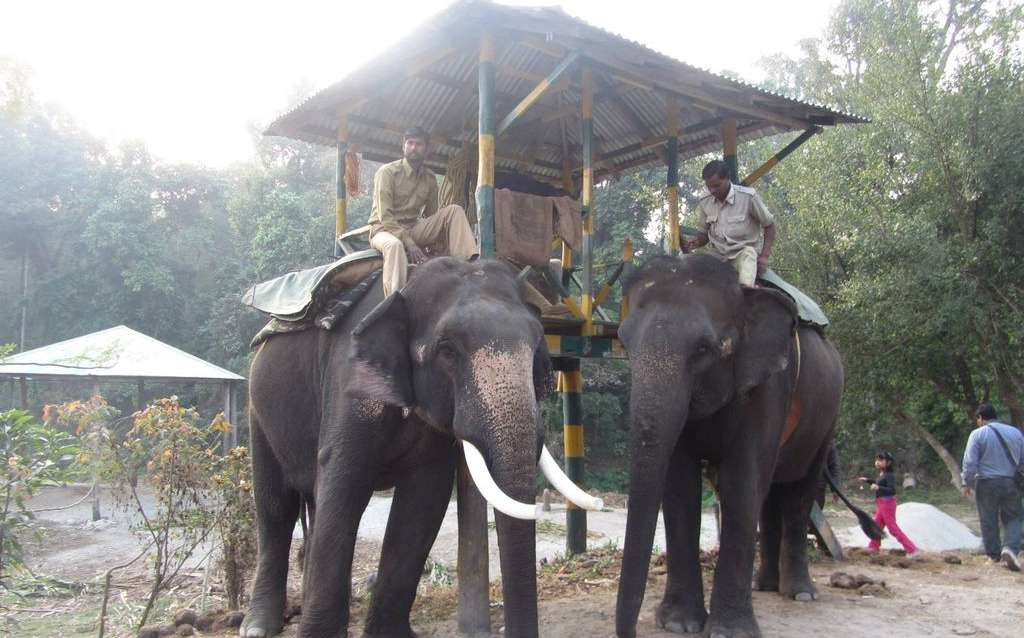 Elephant Safari at Dhupjhora Elephant Camp, Gachbari