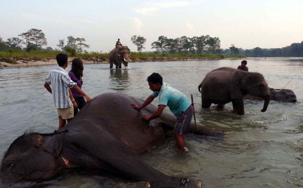Elephant Bath at Dhupjhora Elephant Camp, Gorumara