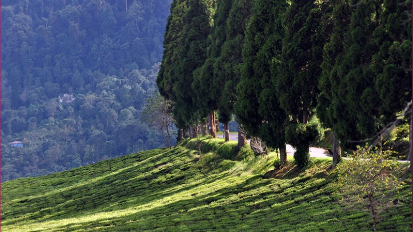 Darjeeling Kalimpong Tour Packages for 4 Days