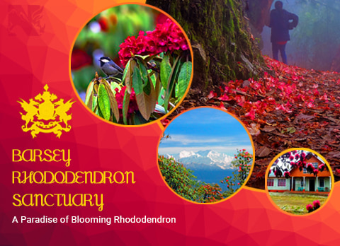 Barsey, offbeat destination in Sikkim