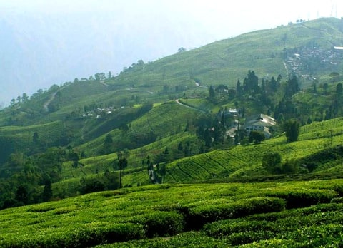 Bunkulung, offbeat destination in Darjeeling