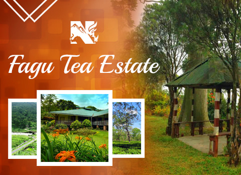 Fagu Tea Estate, offbeat destination in Dooars