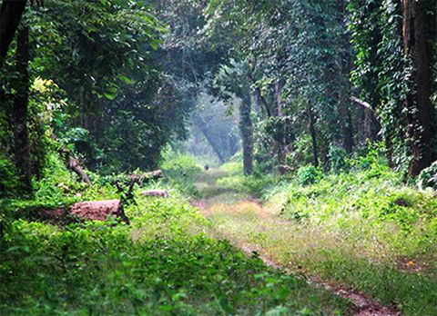 Khuttimari Forest , offbeat destination in Dooars
