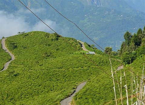 Takdah, offbeat destination in Darjeeling