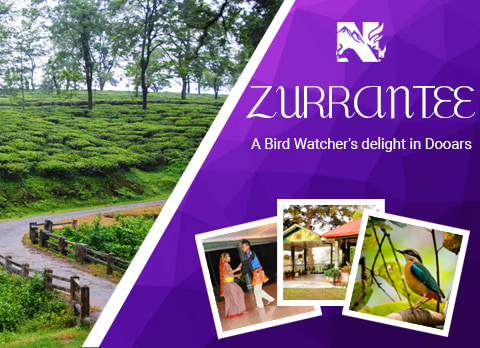 Zurrantee Tea Estate, offbeat destination in Dooars